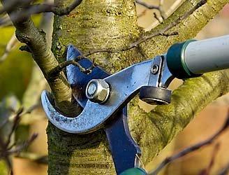 TreePruning-W-ArborDay.jpg