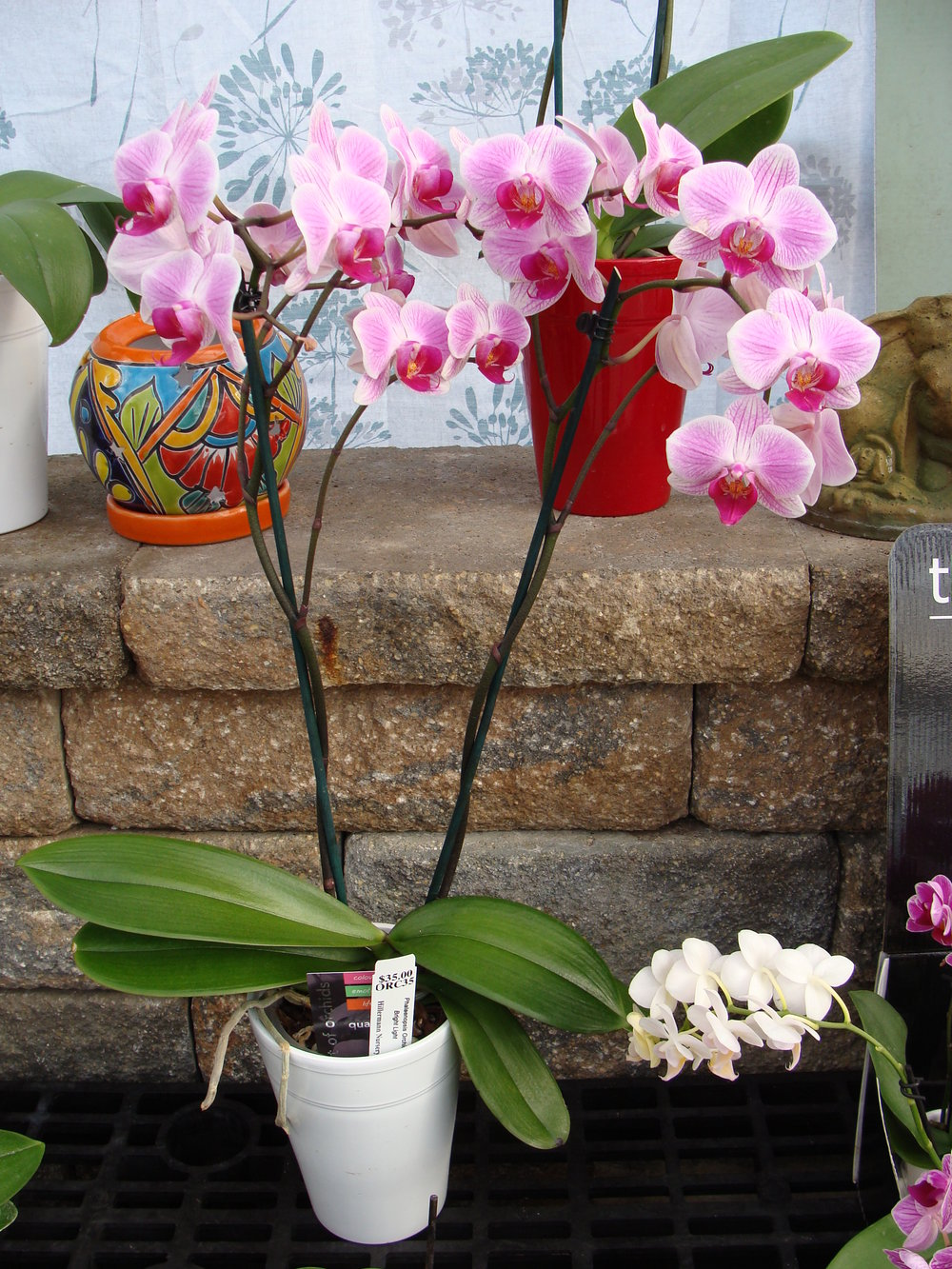 Orchid_Plant_1-18.jpg