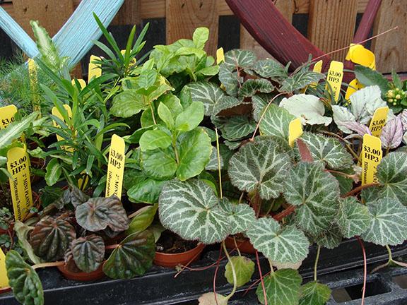 Mini_Garden_Plants_2-19sw.jpg