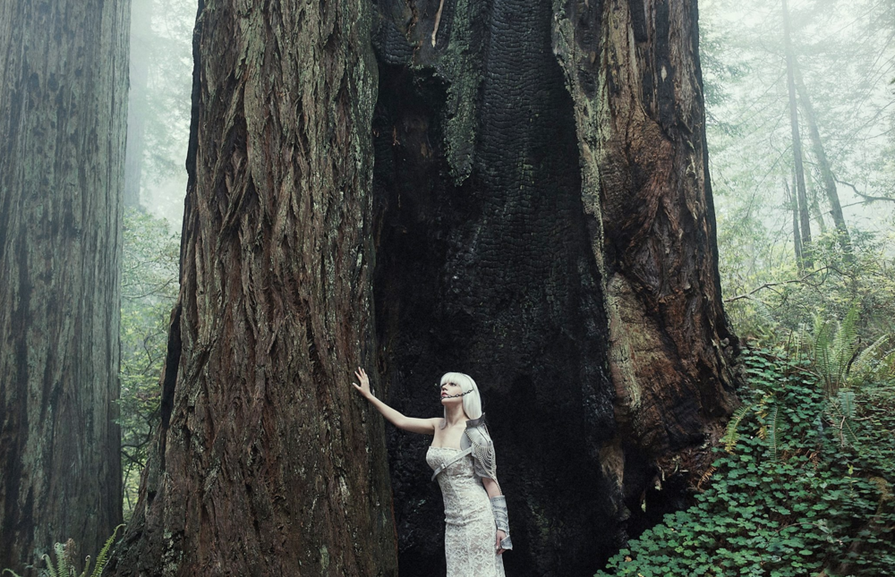 redwoods photoshoot.png