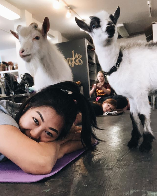 One of the goats pissed on my yoga mat and it was pretty chill considering it also peed on a girl's back