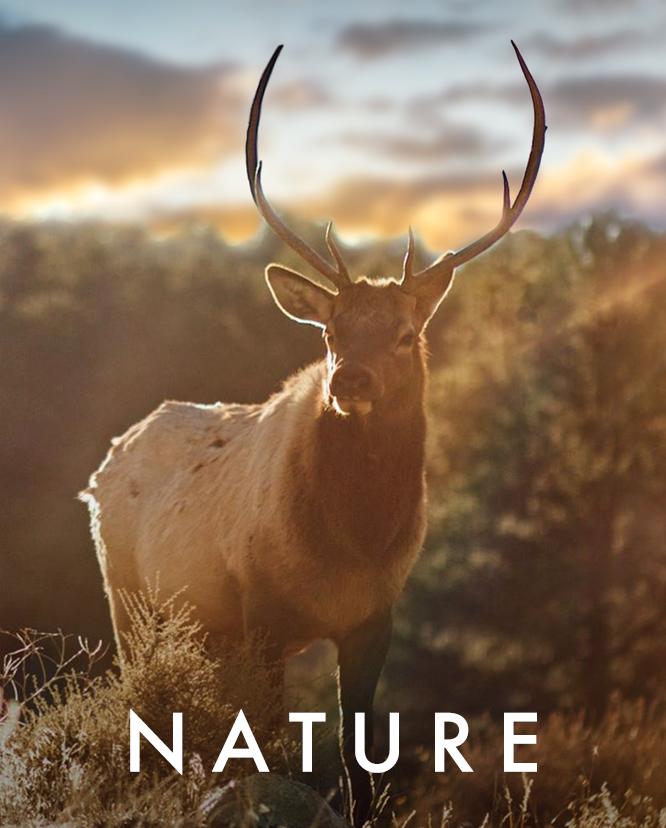 fffilms nature.jpg