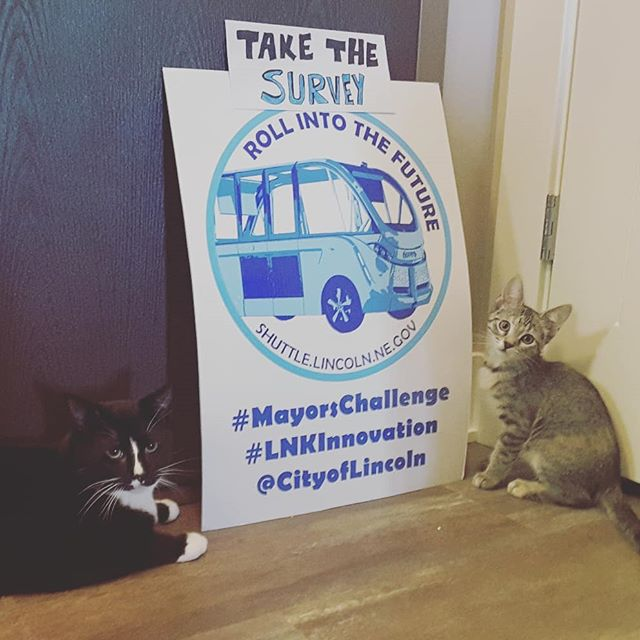 See...the kitties are promoting the shuttle too. Less than 1 hour till the survey is closed. Take the virtual ride survey at shuttle.lincoln.ne.gov 😀 More info on FAQ about autonomous shuttle project in Lincoln, visit bit.do/LNKshuttle 🚌 Let's roll into the future! #LNK #lincolnnebraska #autonomousshuttle  #LNKInnovation #MayorsChallenge
