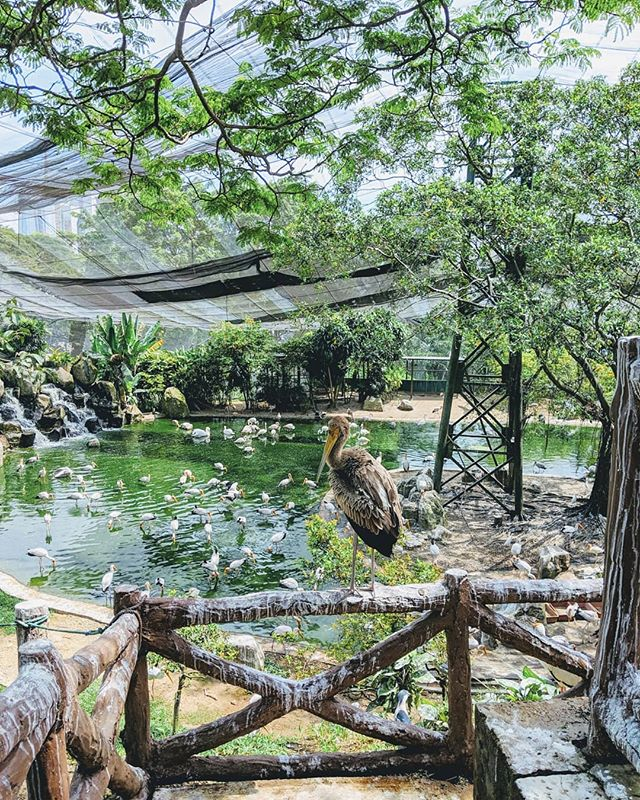 🐦🦅Just chilling with the birds at the World's largest free-flight walk-in aviary in Kuala Lumpur. #birds #klbirdpark #birdpark #bird_watchers_daily #birdwatching 🐓🕊️