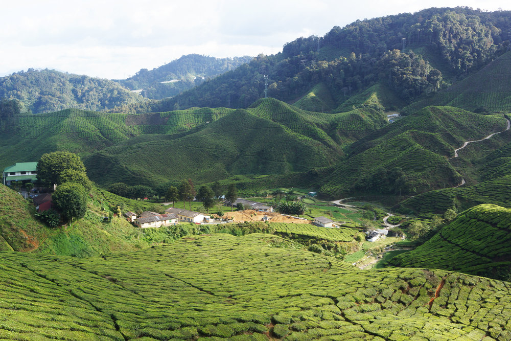 The kitsch Cameron Highlands: touristy as anything, but deservedly so.