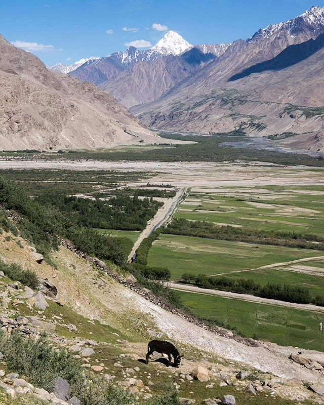 A donkey grazes in one of Asia's most scenic spots. Taken above Zong Village, Tajikistan. In the background is the confluence of the Pamir, Wakhan and Panj Rivers. The snowy peak in the distance separates Afghanistan and Pakistan.