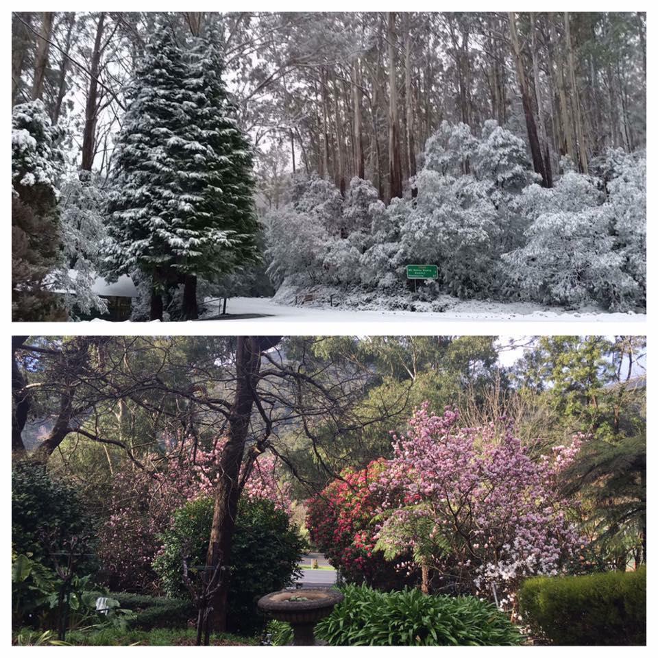 Snow and garden.jpg