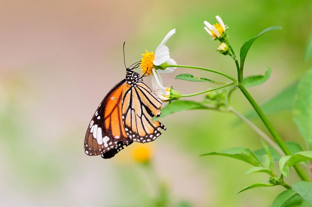 butterfly damaged (1 of 1).jpg