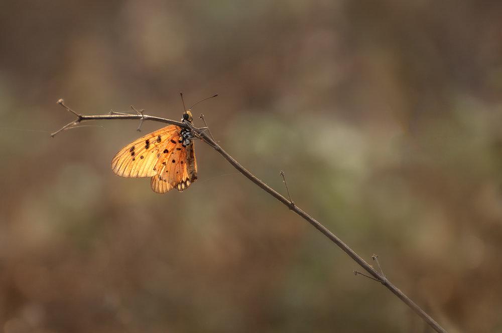 exqu butterfly (1 of 1).jpg