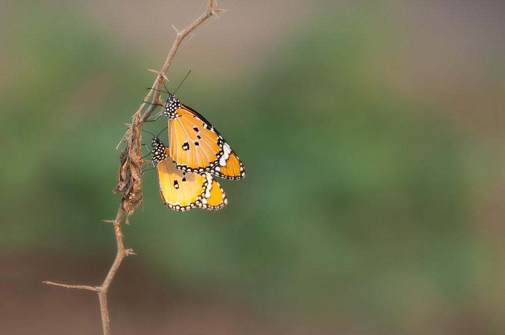 exqu butterfly3 (1 of 1).jpg