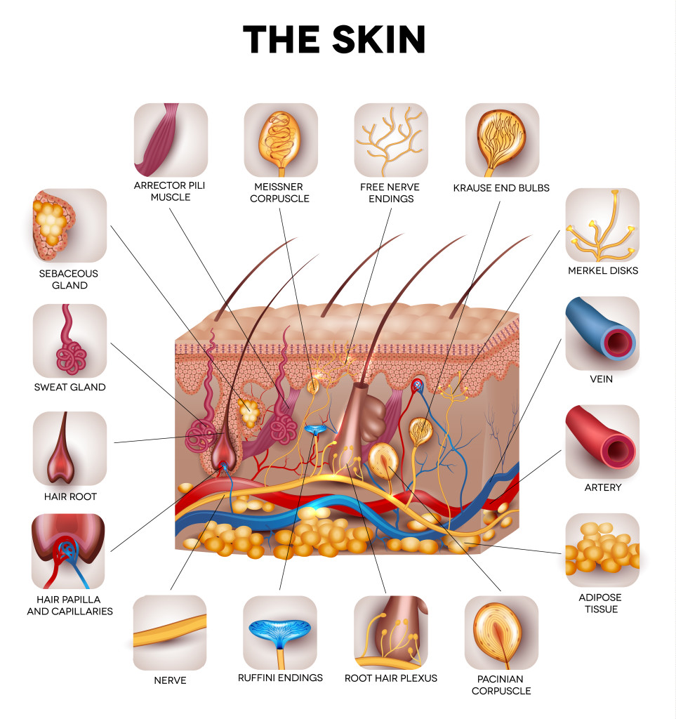 Learn-more-about-your-skin-at-Dermatology-Specialists-of-Charlotte-963x1024.jpg