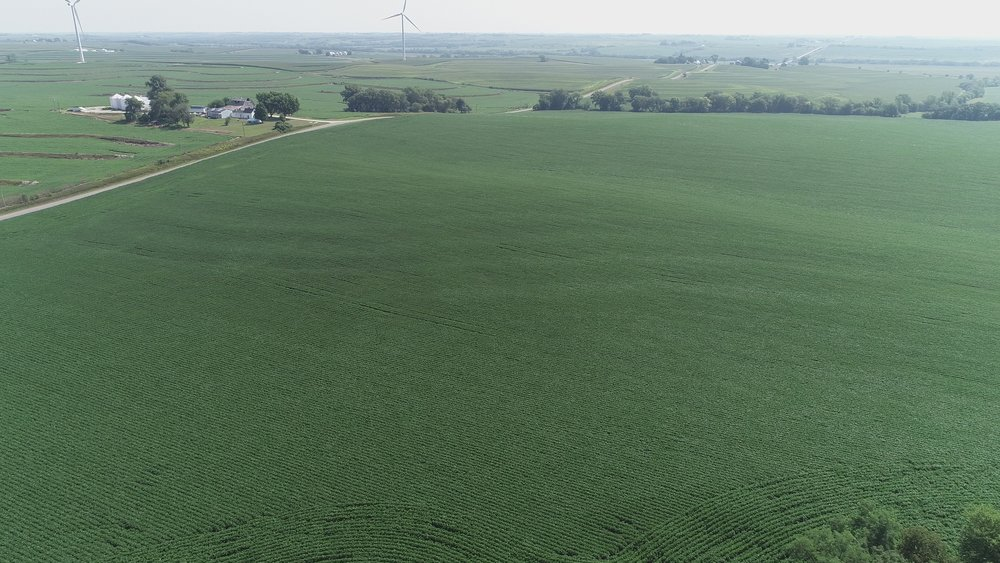 View of North Tract Planted in Soybeans                                                  7/22/18
