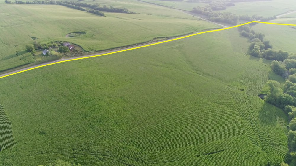 View of North Tract Planted in Corn (June 30, 2018)