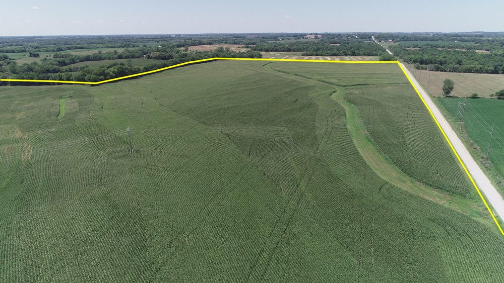 Looking West at West Tract Planted in Corn (July 21, 2018)