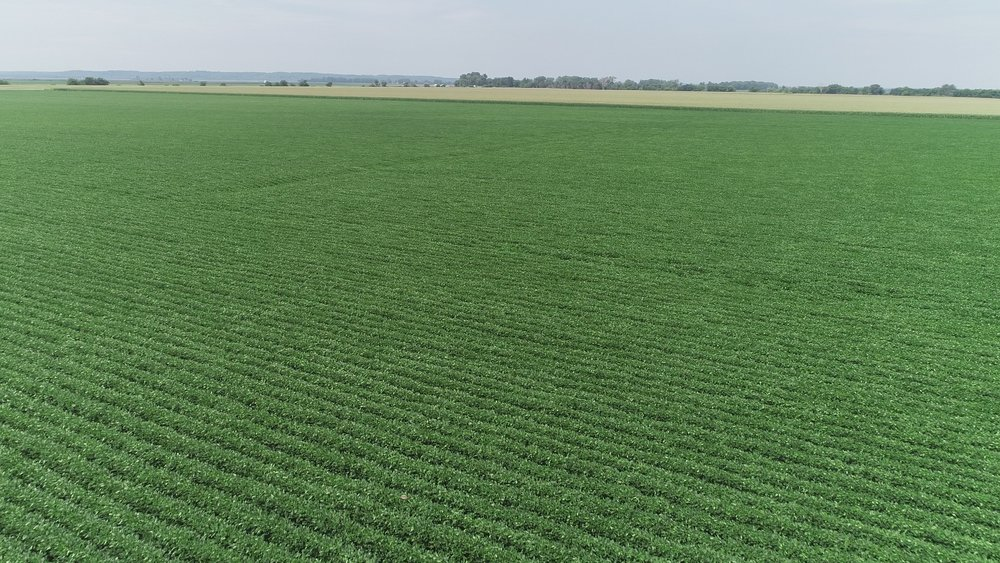 View of West Tract Soybeans (July 23, 2018)