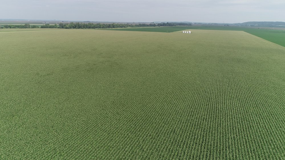 View of West Tract Corn (July 23, 2018)