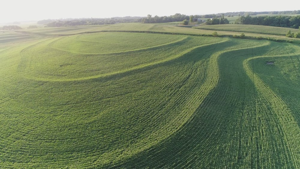 View of South Tract Planted in Soybeans (June 28, 2018)