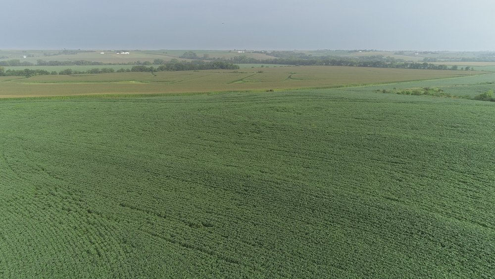 View of East Tract Soybeans and West Tract Corn (July 23, 2018)
