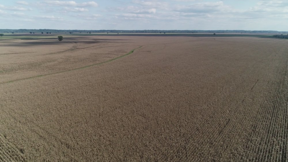 View of Central Tract Planted in Corn (September 12, 2018)