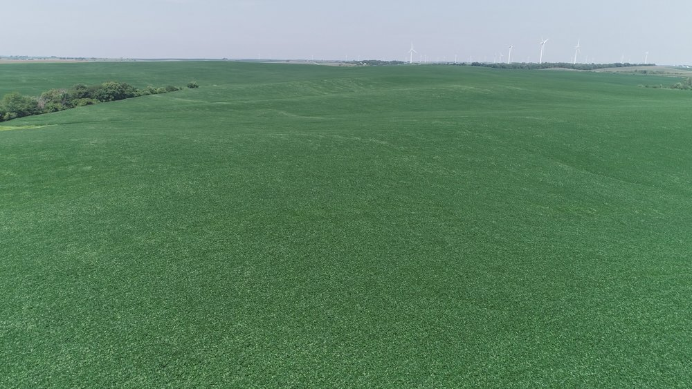 View of East Tract Soybeans (July 22, 2018)