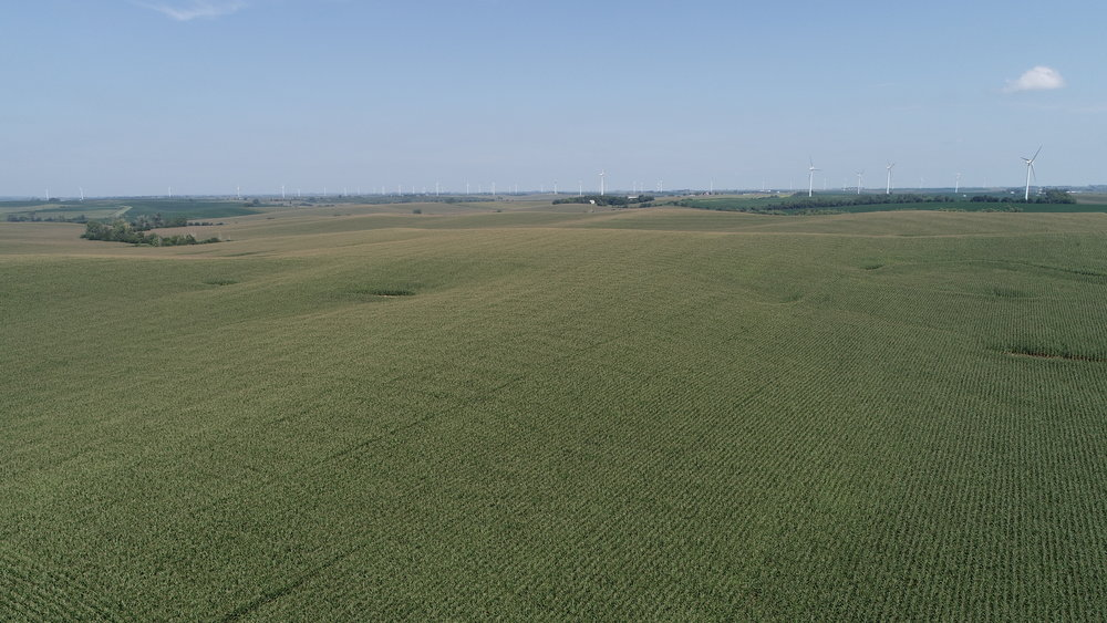 View of West Tract Corn (July 22, 2018)