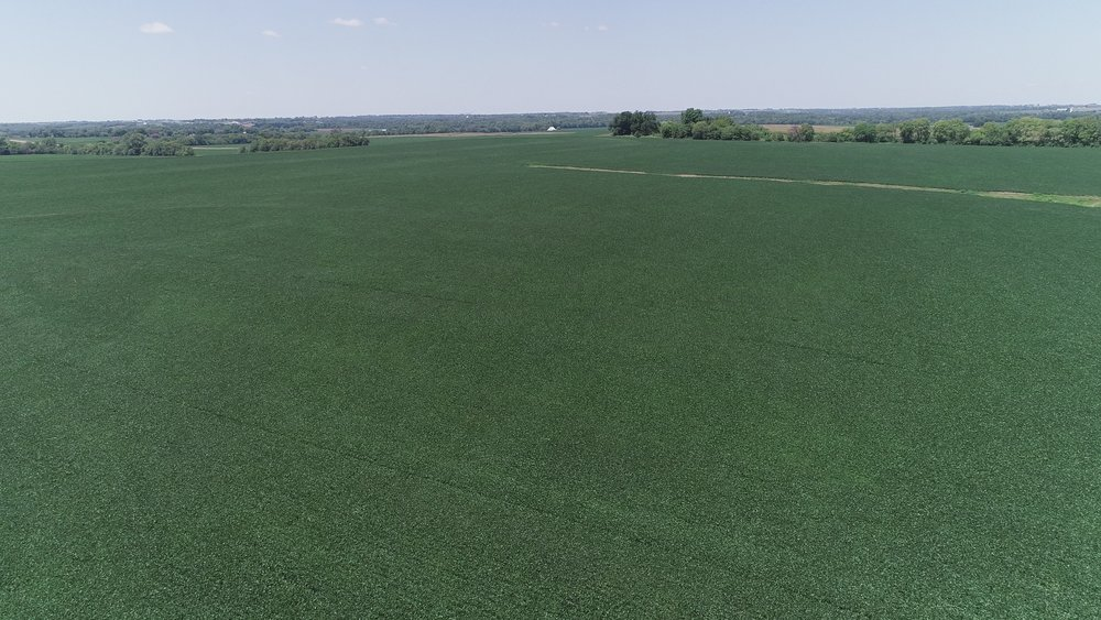 View of Northwest Tract Planted in Soybeans (July 21, 2018)