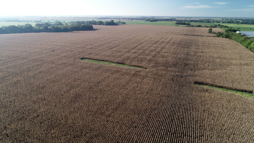 View of Field Planted in Corn (September 13, 2018)