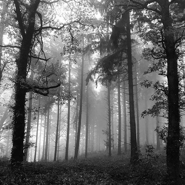 Woods. • • • #monochromephotography #mistyday #woodland #stourhead #kingalfredstower #themonochromerambler #lifeinblackandwhite #sundaystroll #monochrome #blackandwhitephotographer #blackandwhitephotography