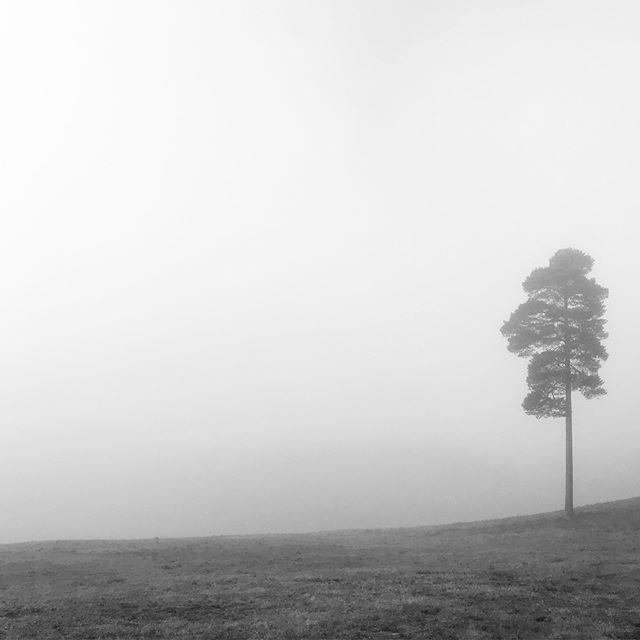 Fog. • • • #lifeinblackandwhite #themonochromelife #themonochromerambler #blackandwhitephotography #bournewoods #lowerbourne #farnham