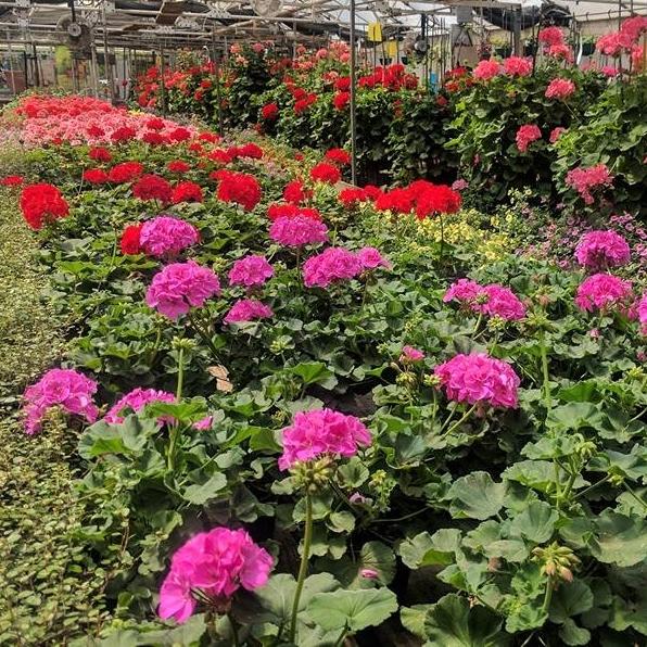 Plants & Greenhouse - Outdoor & Indoor Plants, Garden Baskets, Orchids, Seasonal Planters, Succulents...