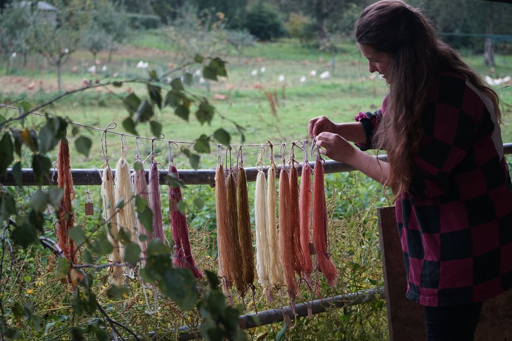Hanging dyed skeins out to dry