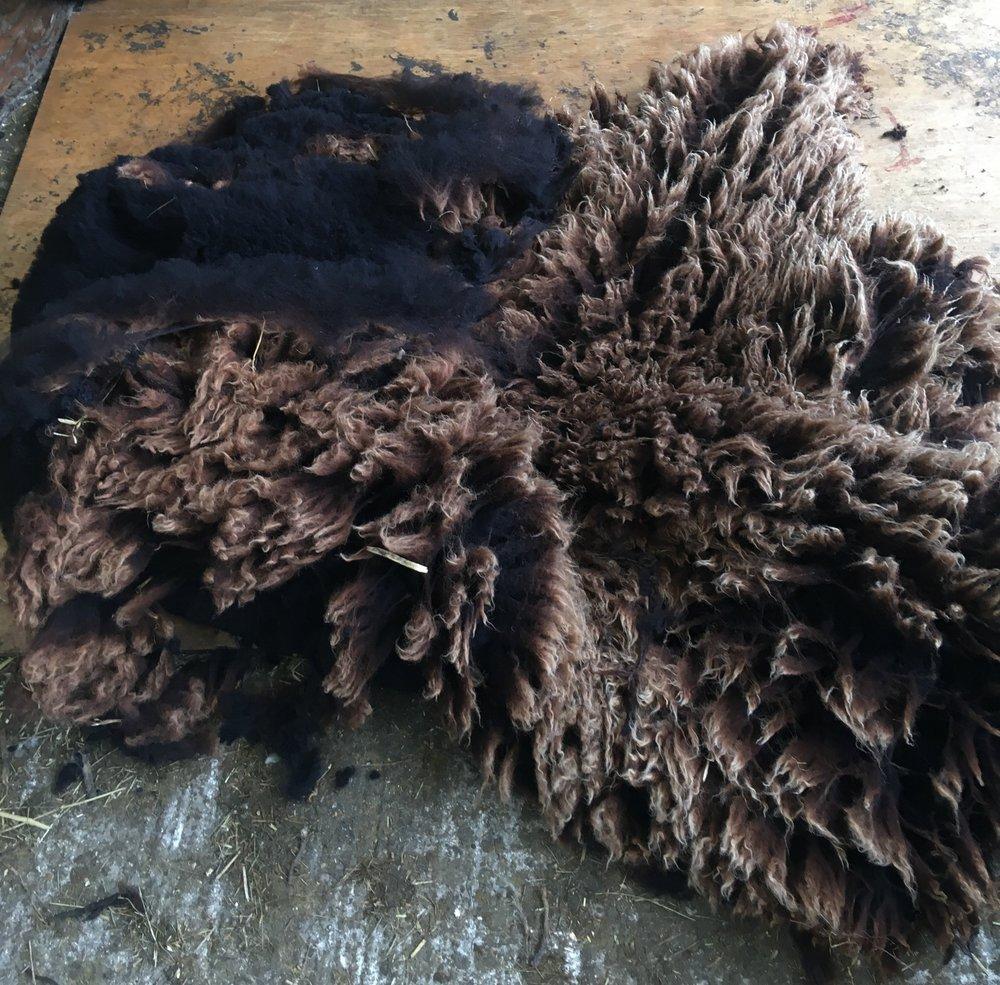 Jacob cross Lleyn shearling fleece