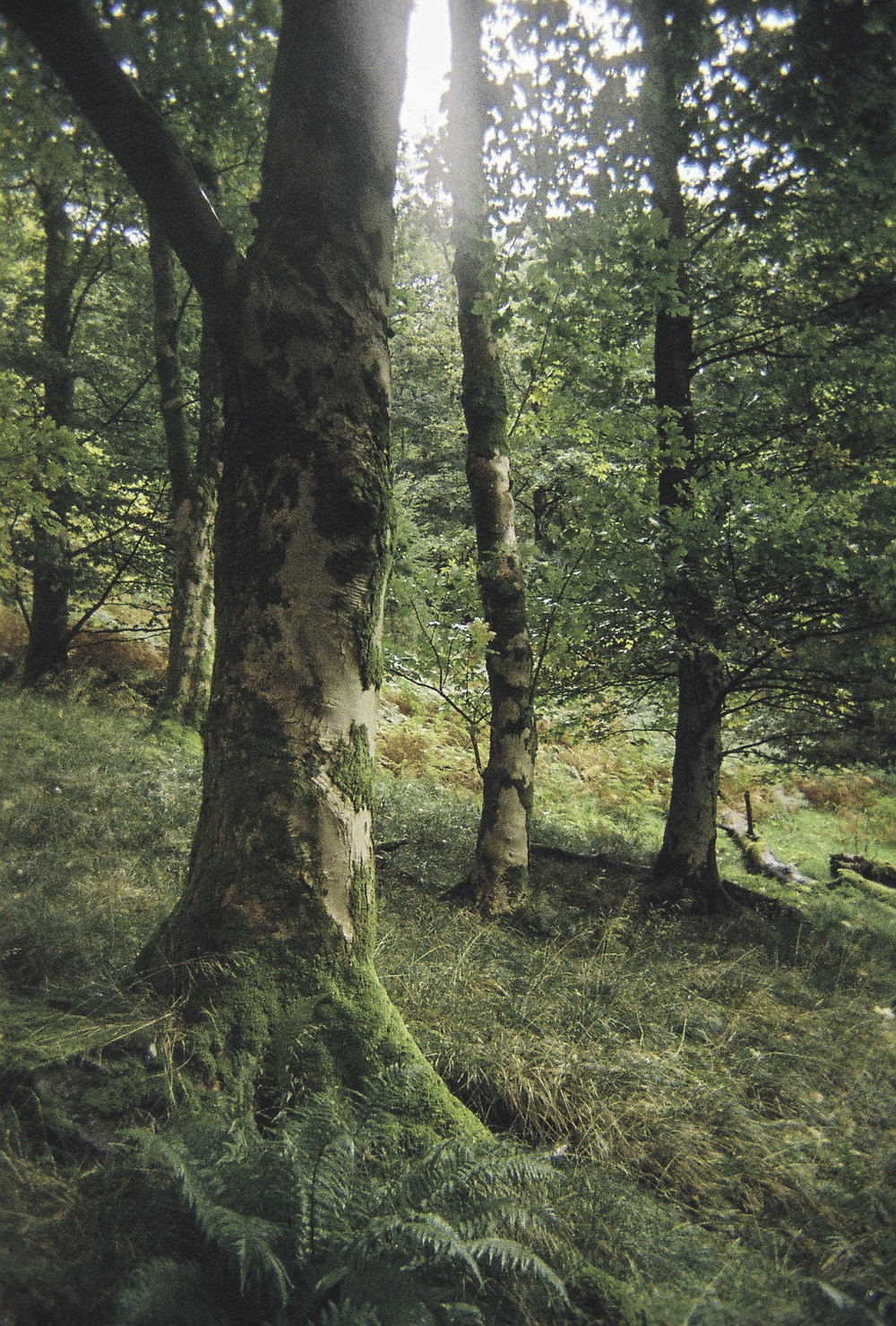 Trio of Trees.jpg