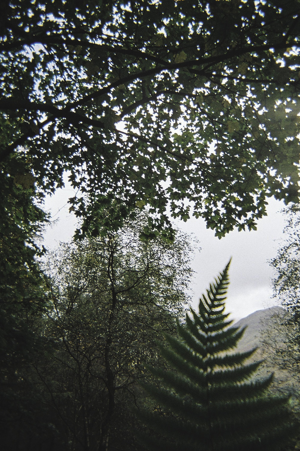 Fern Foreground.jpg