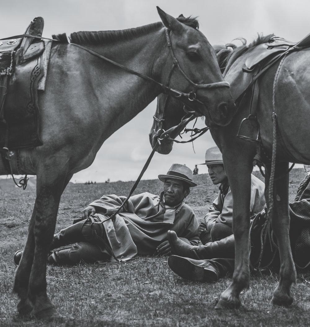 horse b and w1 copy.jpg