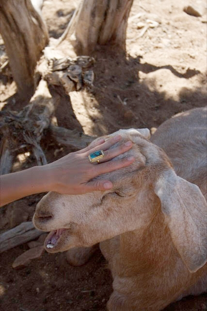 Maria with Maria the goat! And the KSKYE the Label -  CYLLENE Ring .