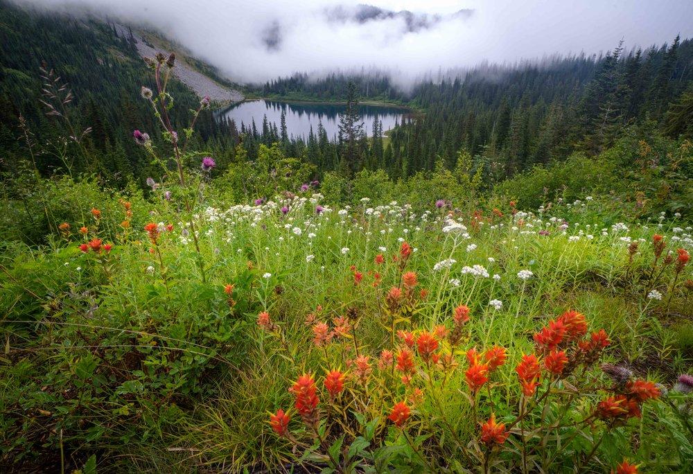 Mt Raineer 20-2.jpg