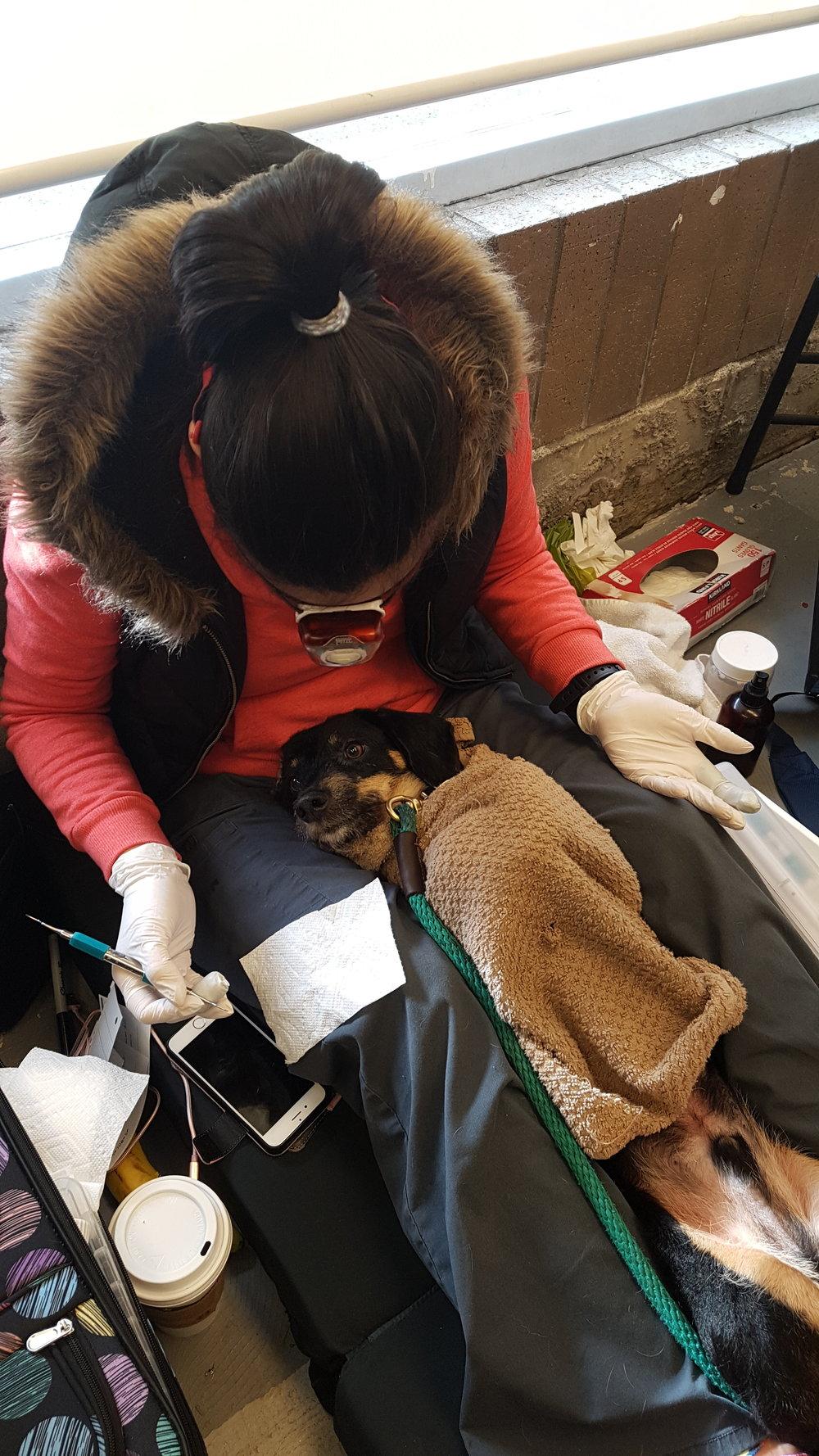 Bonzo relaxing at the dentist (aka K9 Gentle Dental)