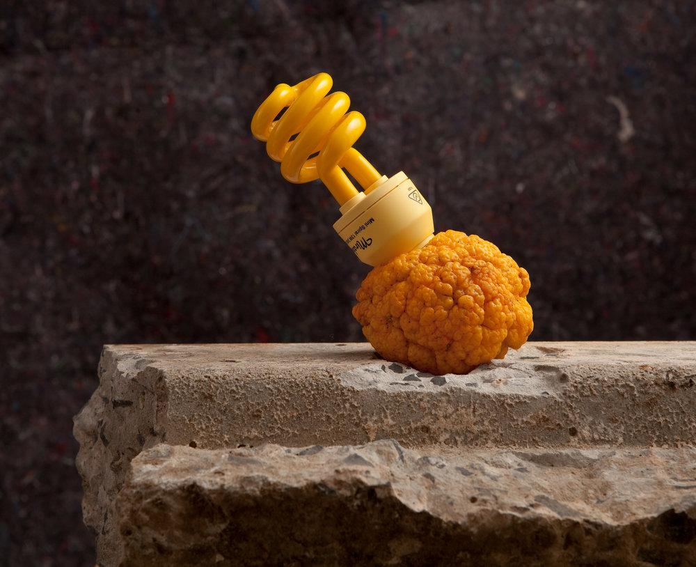 Beuys_Lemon_Shoot.jpg