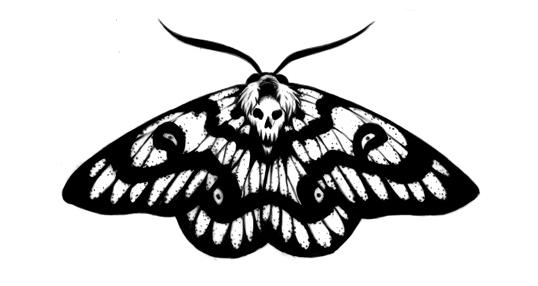 moth2_small.jpg
