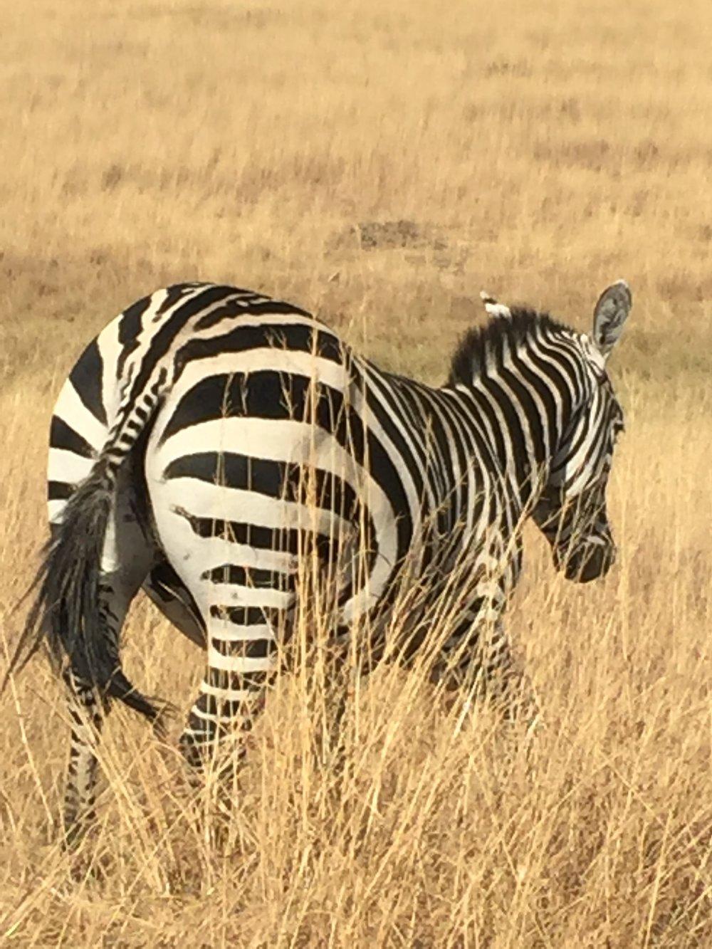 Safari - Nairobi, Kenya