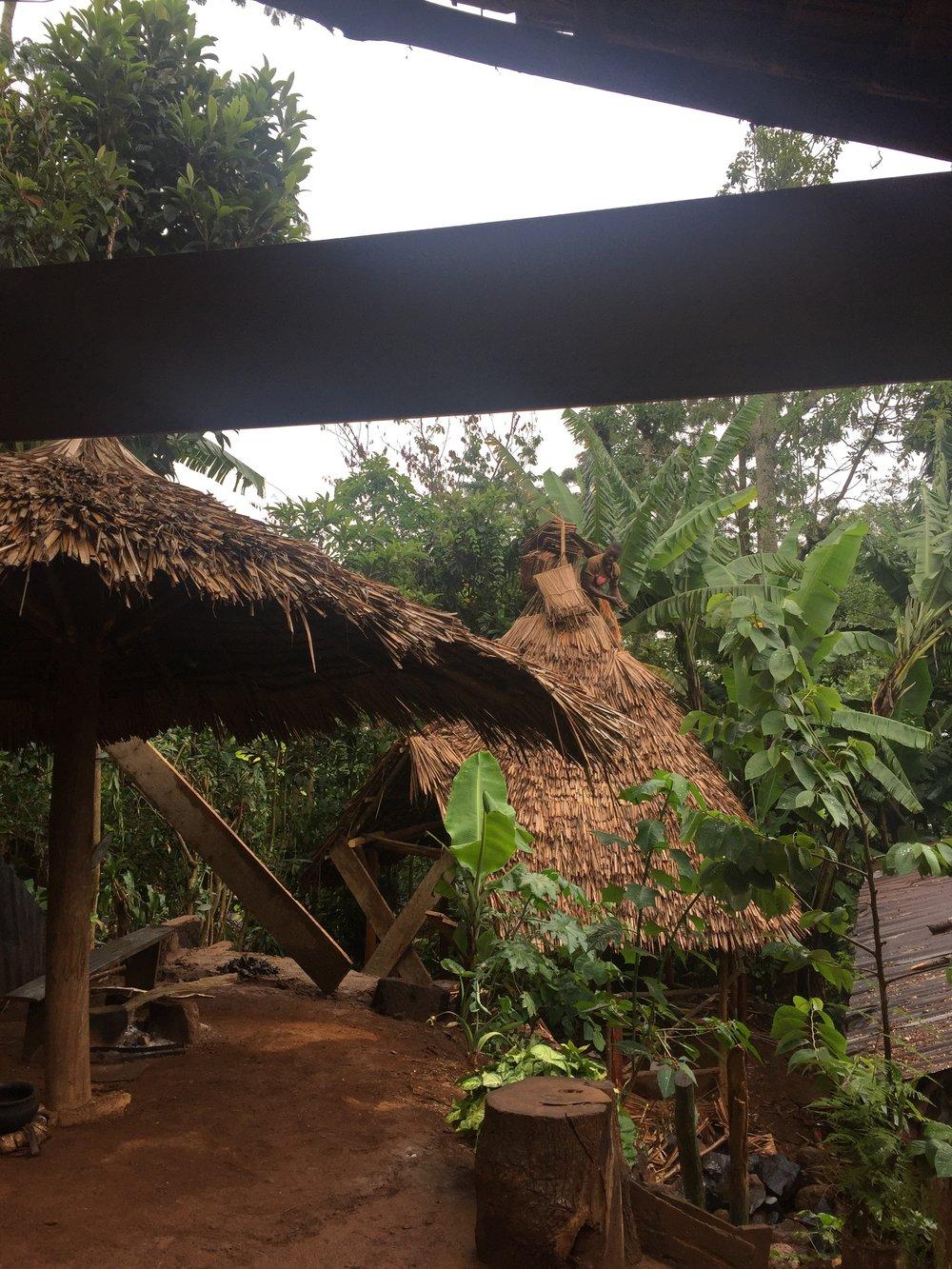Coffee Farm, Agriculture, Dar es Salaam, Tanzania