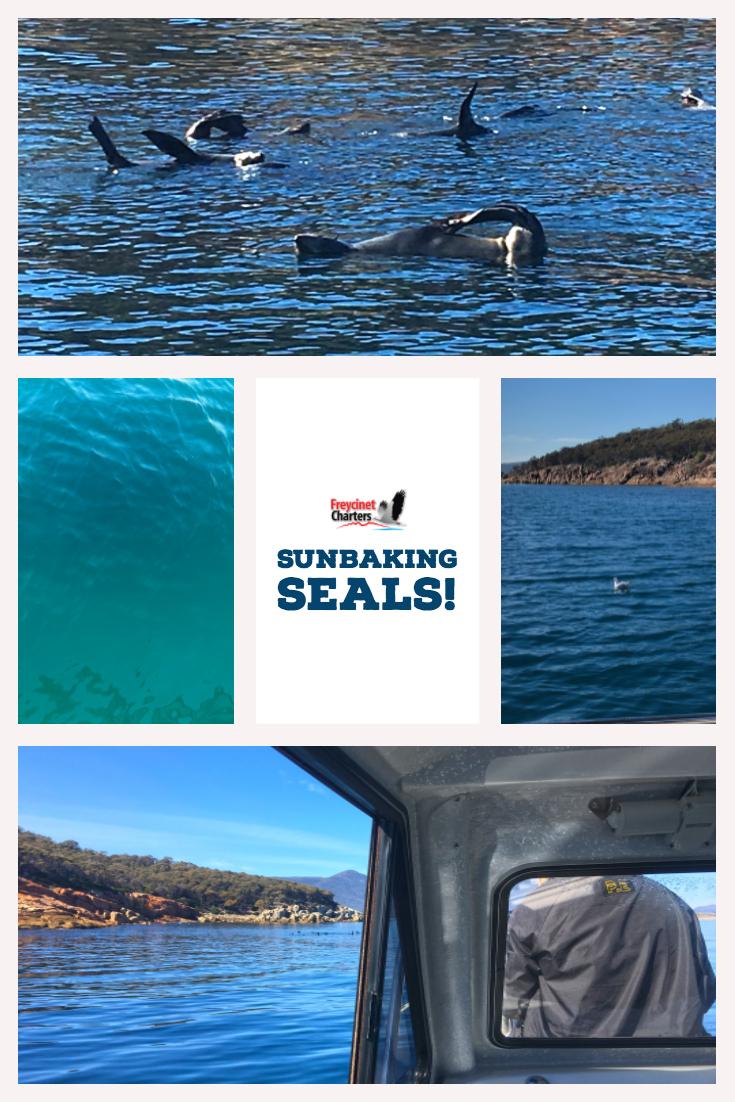 Sunbaking_Seals.jpg