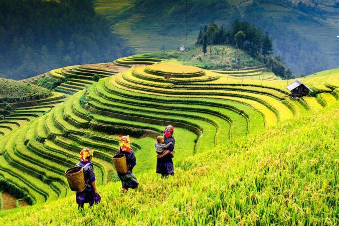 Ruộng bậc thang Việt Nam, một điểm du lịch ưa thích của du khách
