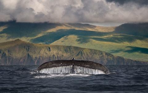 Mùa ngắm cá voi bên bờ biển Tây (Ảnh: Getty)