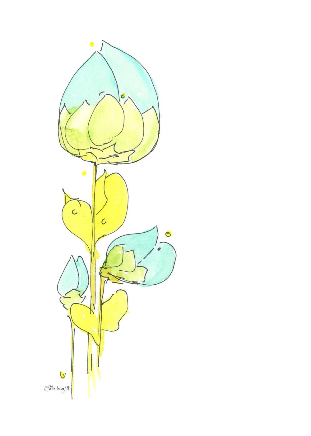 blue tulip.jpg
