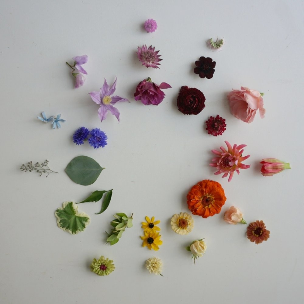 Flower Color Theory Bewilder Floral