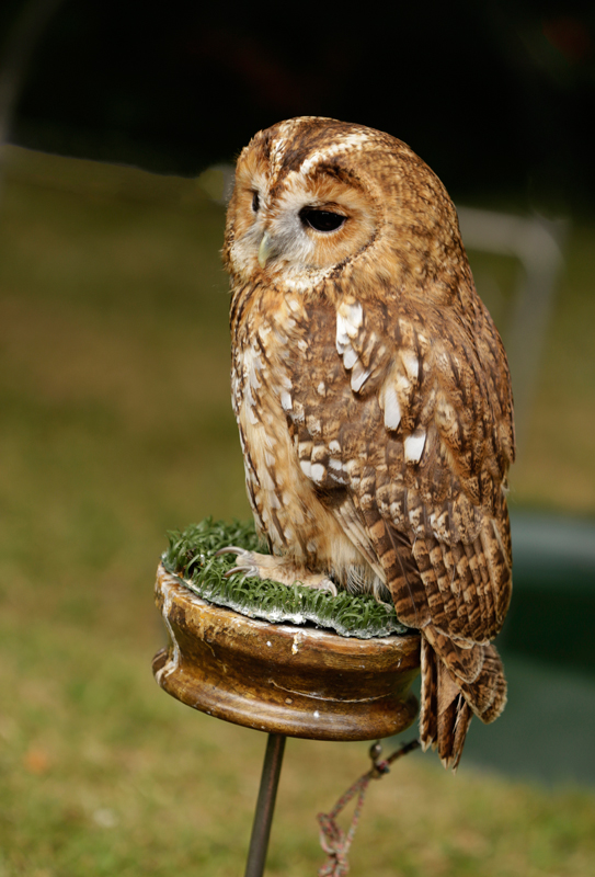Owl Sanctury_0041.JPG