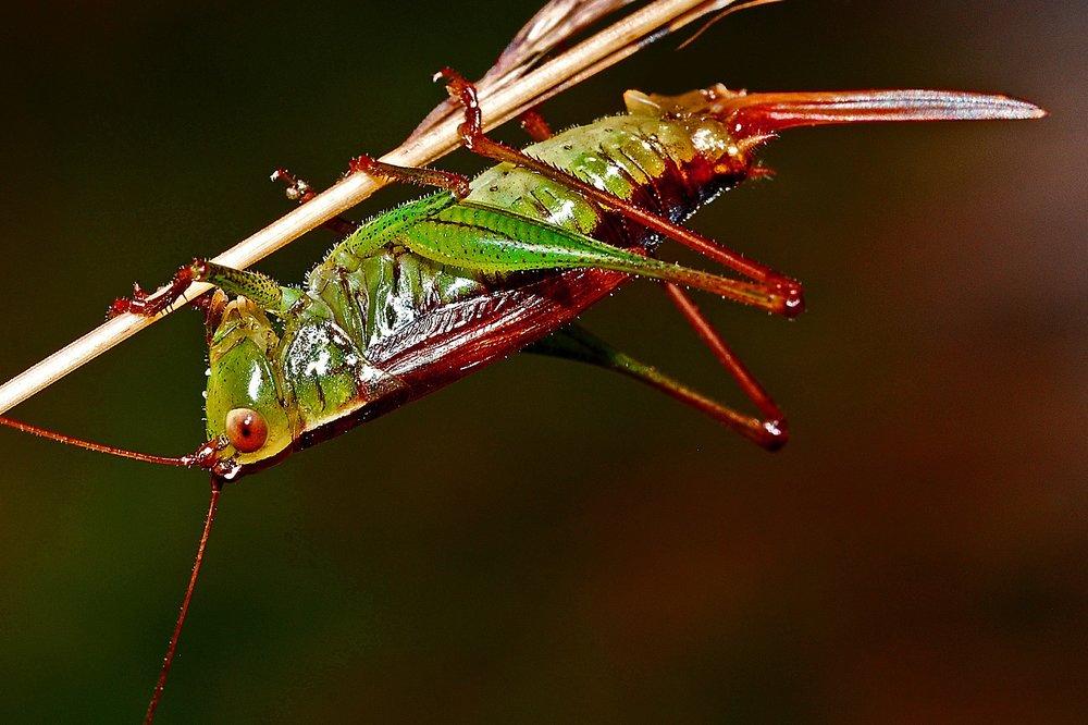 grasshopper-562090_1920.jpg