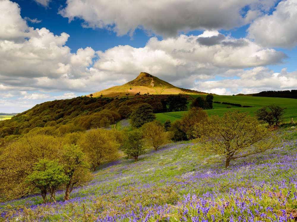 Roseberry Topping & Bluebells.jpg